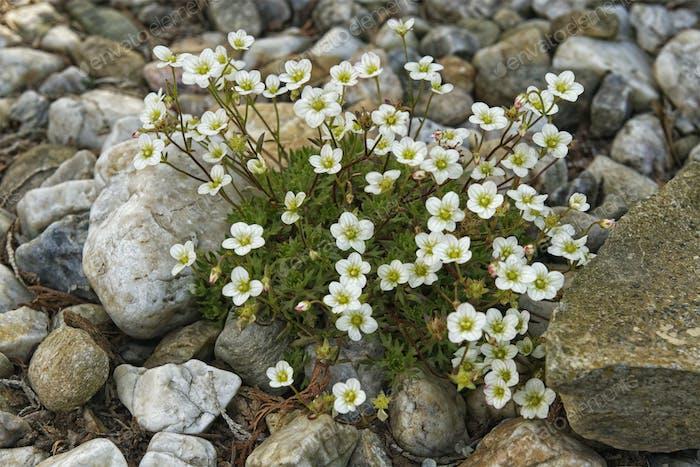 Blumen wachsen zwischen den Steinen