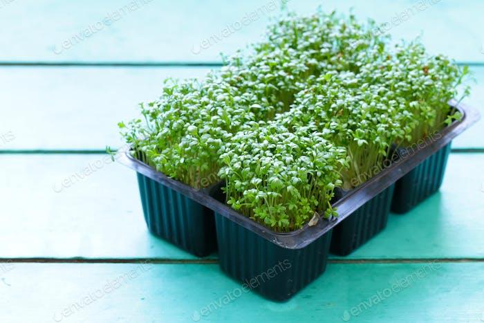 Kressen-Salat