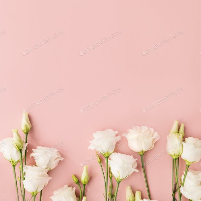 Thumbnail for White flowers on pink background