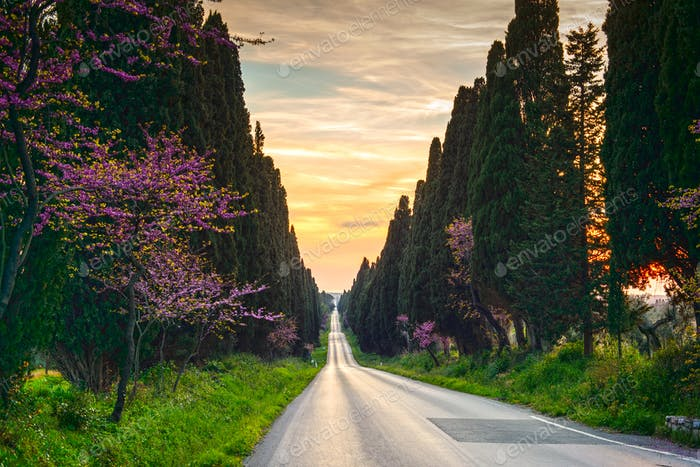Bolgheri berühmten Zypressen Baum gerade Boulevard auf Sonnenuntergang. Mär