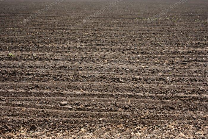 Fresh soil