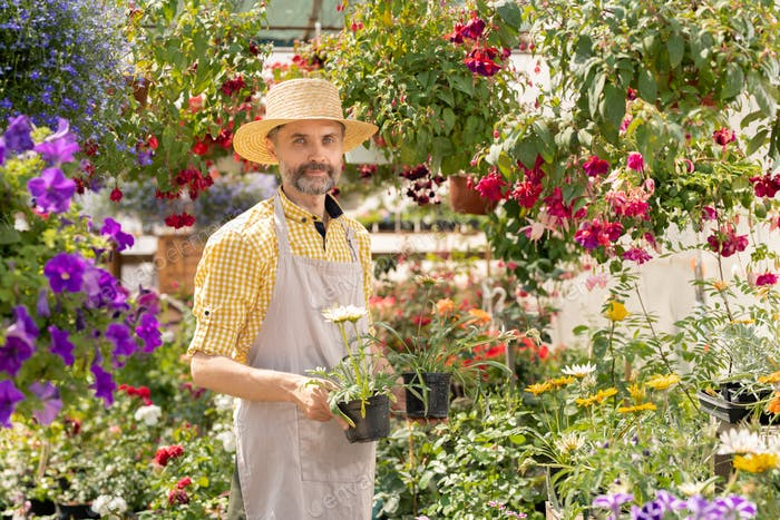 Mature farmer holding two flowerpots with new sorts of flowers