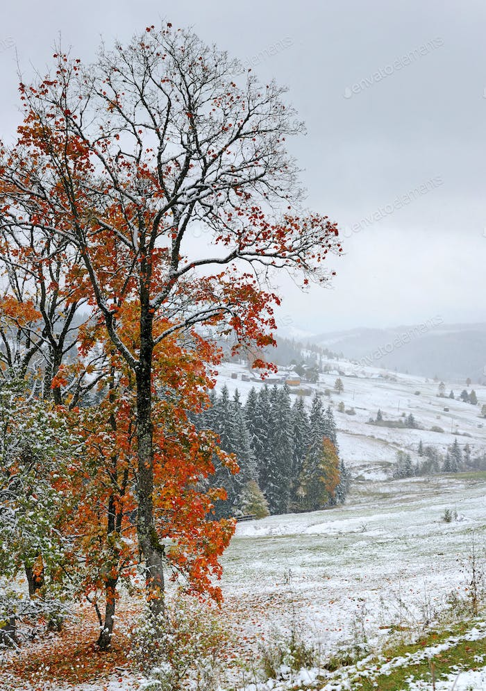 First autumn sudden snow