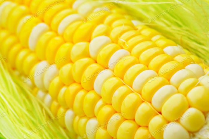 Frischer Maiskolben