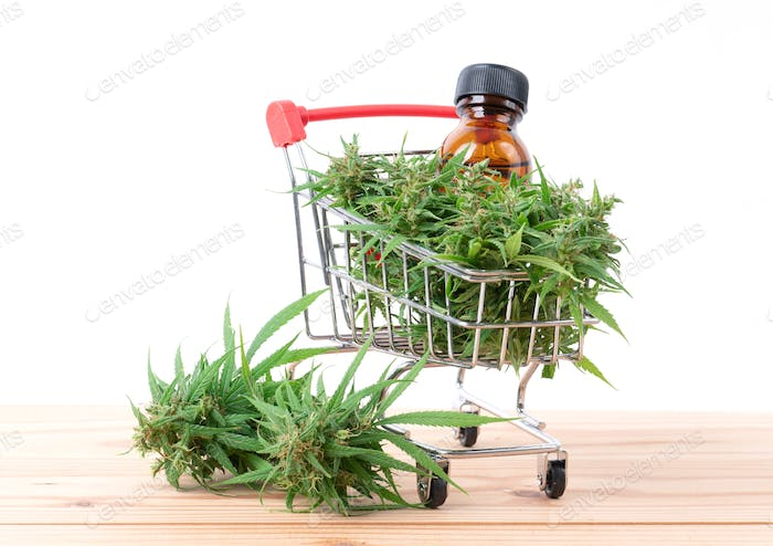 cannabis with cannabidiol (cbd) extract on white background