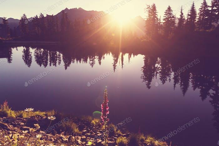 Picture lac
