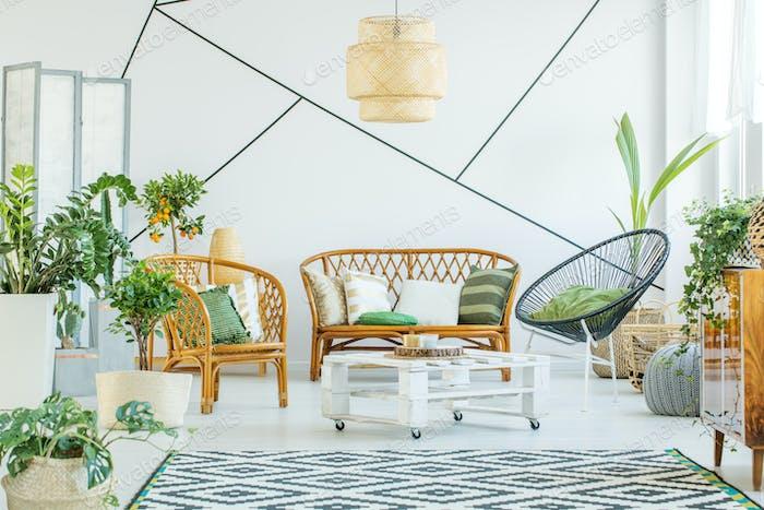 Plants in modern living room