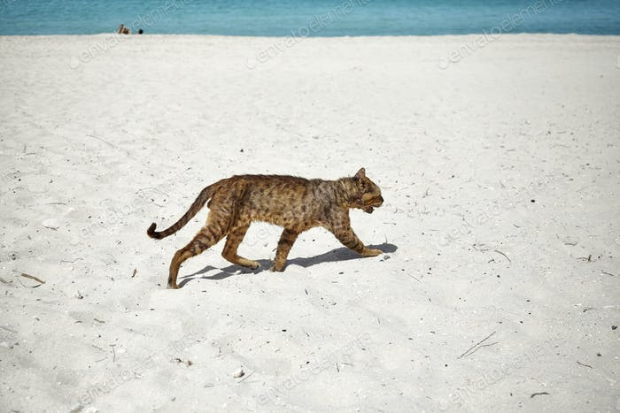 Stray cat runs through an empty beach