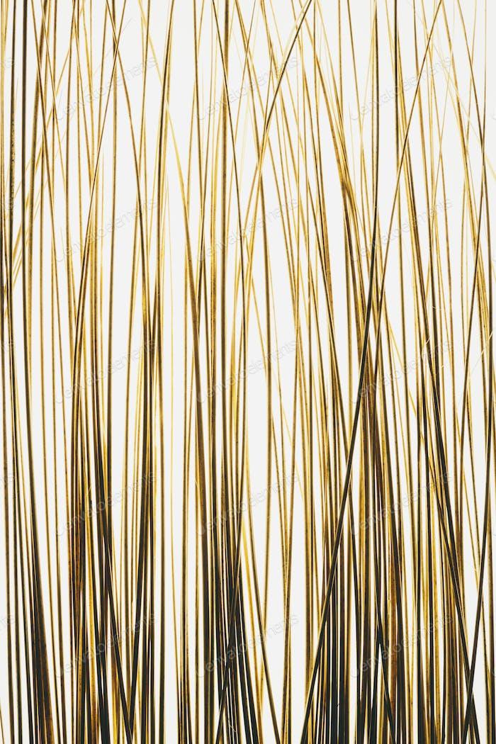 Ornamental grasses on white background.