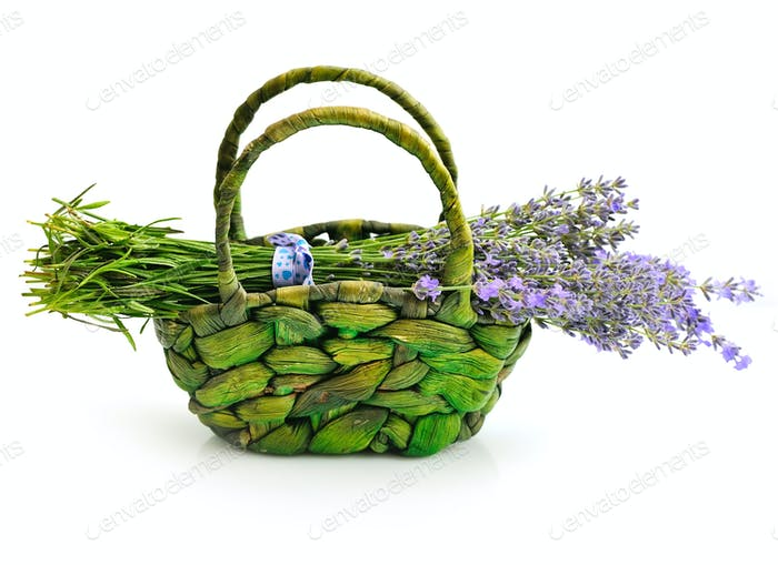 Lavender flowers (Lavandula) in basket on white