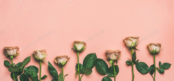 Flat-lay of roses over light pink background, copy space