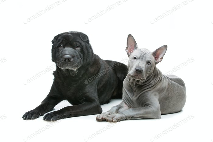 Beautiful dogs isolated on white background