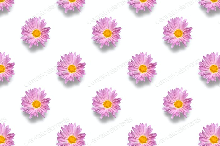 Macro pattern flower bud isolated on white background