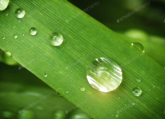 Macro of raindrop.