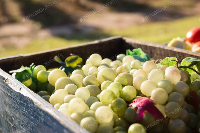 Harvested grapes in crate at vineyard