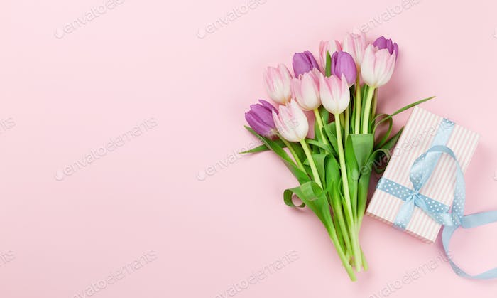 Pink tulips over pink background