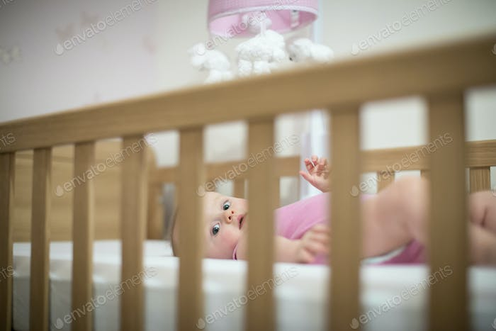 Baby lying on back in cot looking at camera