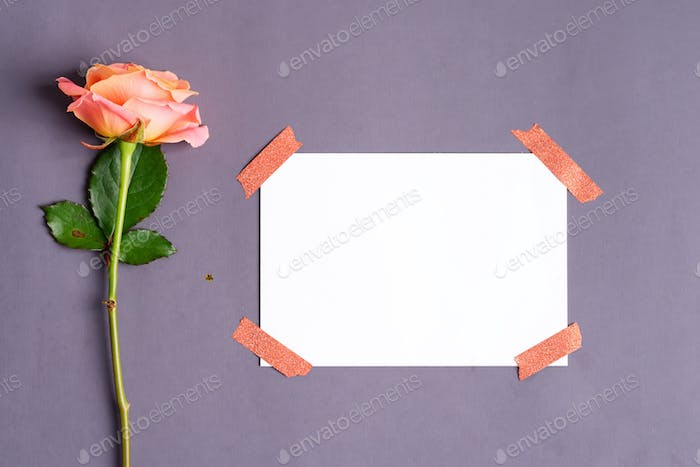 Fresh roses flower and paper for text attached by tape on a dark grey background. Top view
