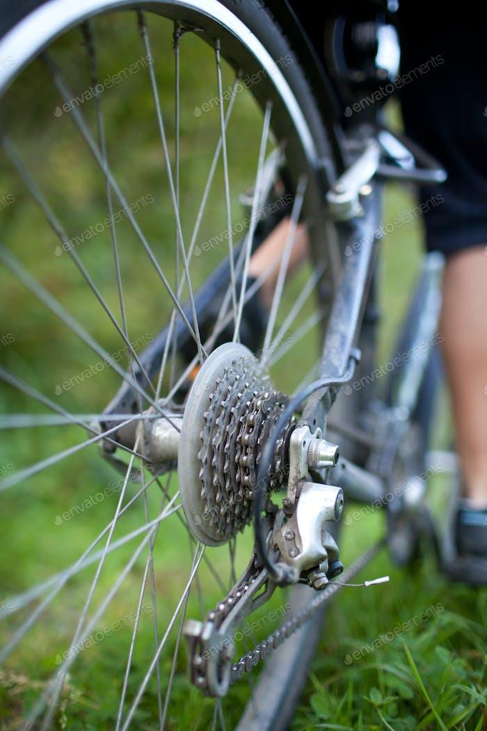 Radfahren - Hinterrad eines jungen Frauen-Mountainbike auf einem grünen