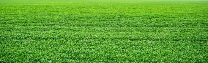Green field in the summer panoramic view