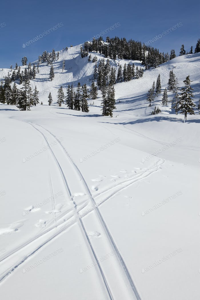 Parallel ski tracks,pair crossing,in a snowy landscape.