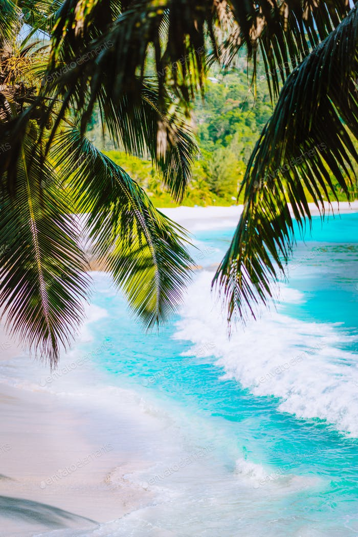 Palm tree leaves on beautiful tropical paradise Anse intendance beach. Ocean wave roll on sandy