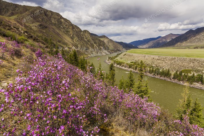 Amazing landscape with mountains, river and blooming rhododendron