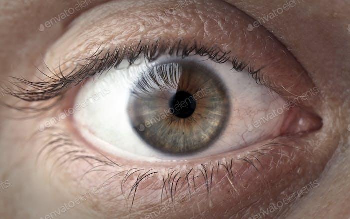 Offenes Auge