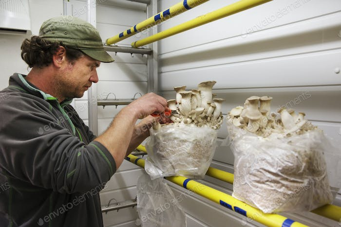 Man standing in front of a shelf with two bags of white mushrooms.