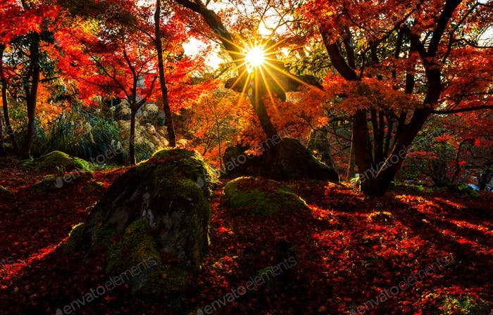 Silhouette of autumn leaf with sun flare in Eikando temple, Kyoto, Japan
