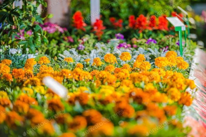Botanical Garden Mulitcolor Flower Bed.