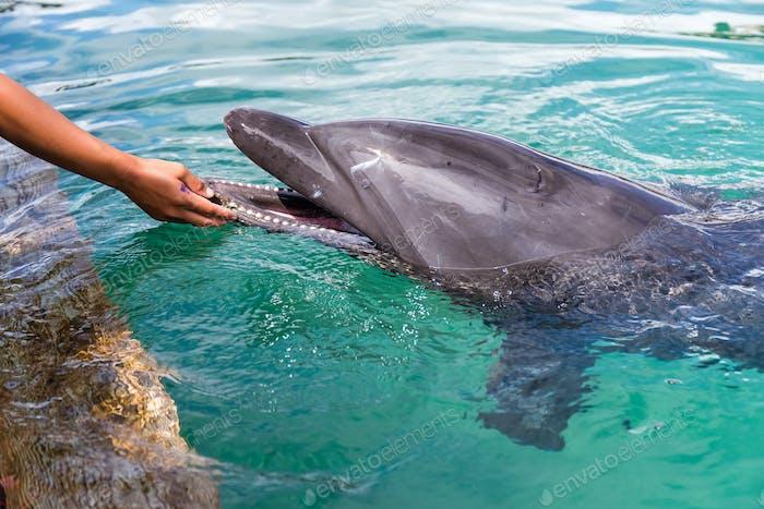 Menschliche Berührung der Delfine