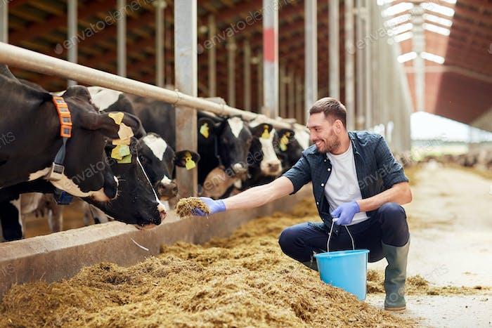 Mann Fütterung Kühe mit Heu in Kuhstall auf Milchfarm