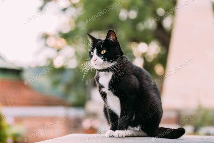 Gorgeous Black And White Cat Sitting Outdoor