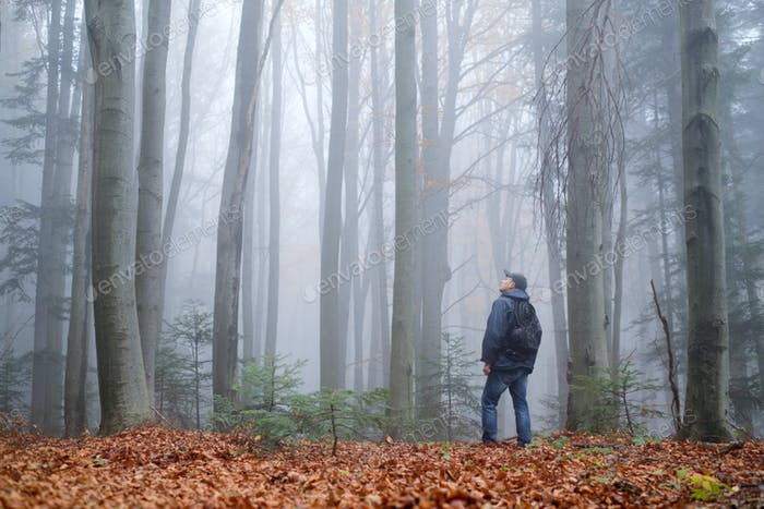 Man in the mysterious dark beech forest in fog