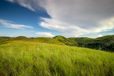 green grass climbs sumba island indonesia photo