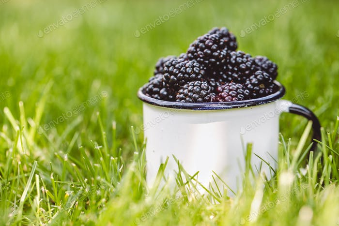 blue violet forest berries lie in a ceramic white cup on a green grass, food and vitamins