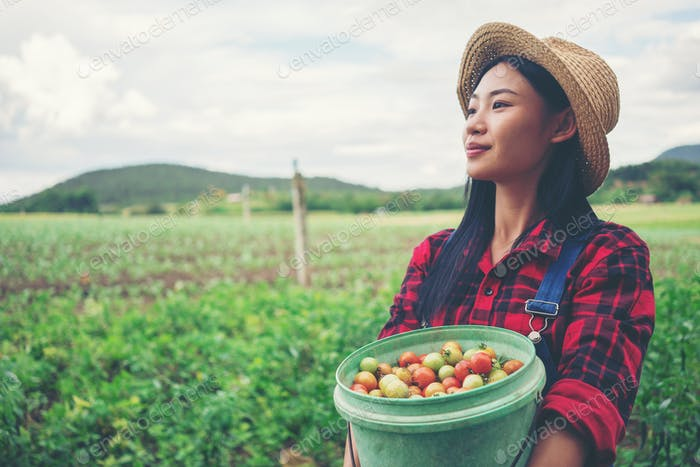 Smiling farmer in the tomato field