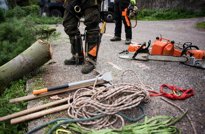 Midsection of arborist men with chainsaw and ropes cutting a tree.
