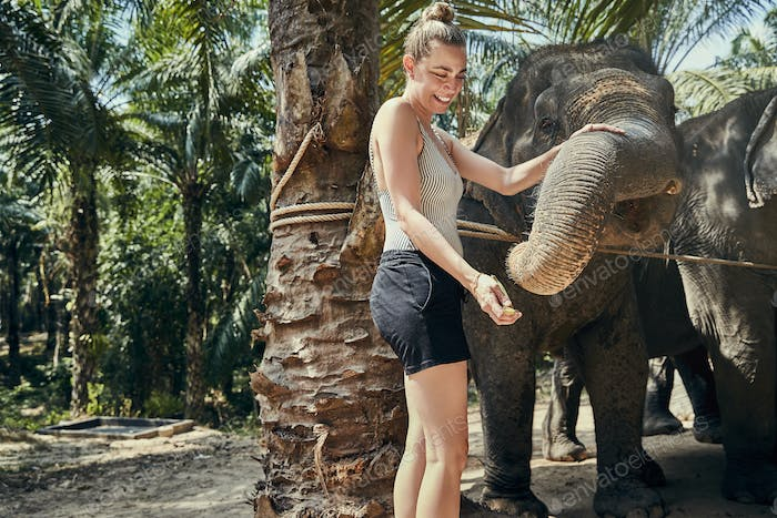 Smiling woman feeding bananas to an elephant at a sanctuary