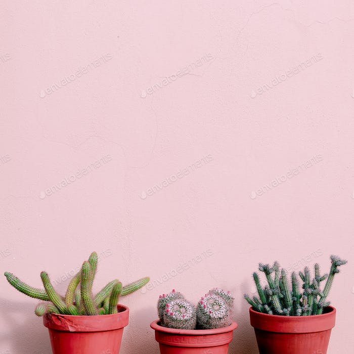 Home plants decor. Cactus set on pink wall. Cactus lover fashion