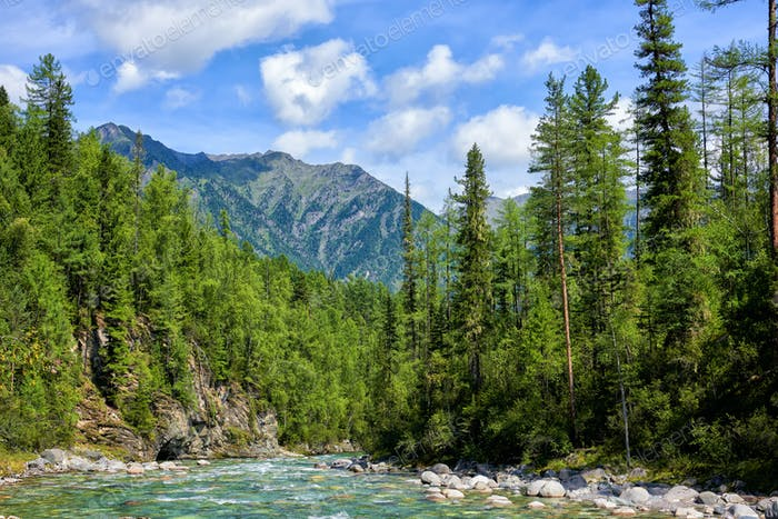 Boreal Forest and Shallow Mountain Stream