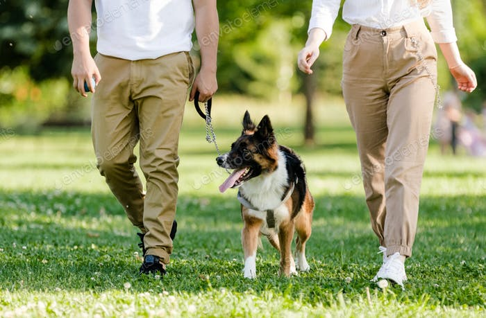 Young couple walking with their dog Border Collie in a park. Unrecognizable persons