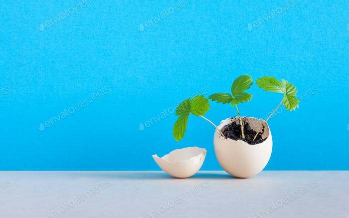 Sprouts in an eggshell. Easter new life concept.