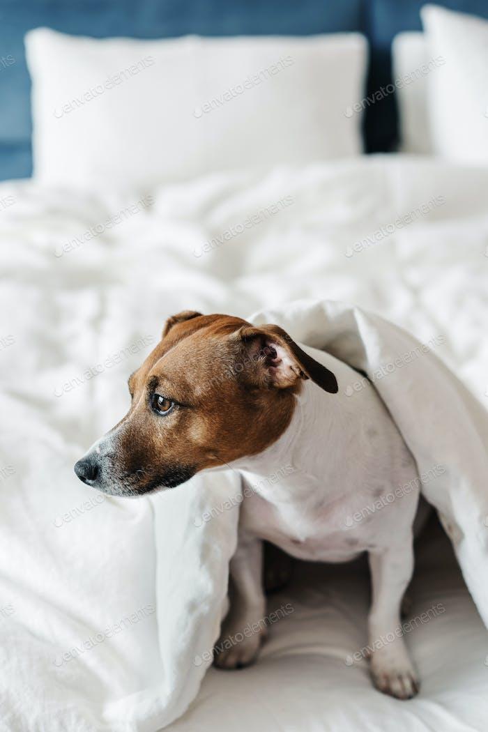 El perro en la cama.