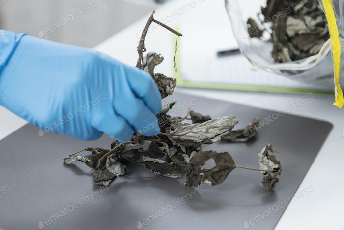 Bio-Zertifizierungsprozess im Labor