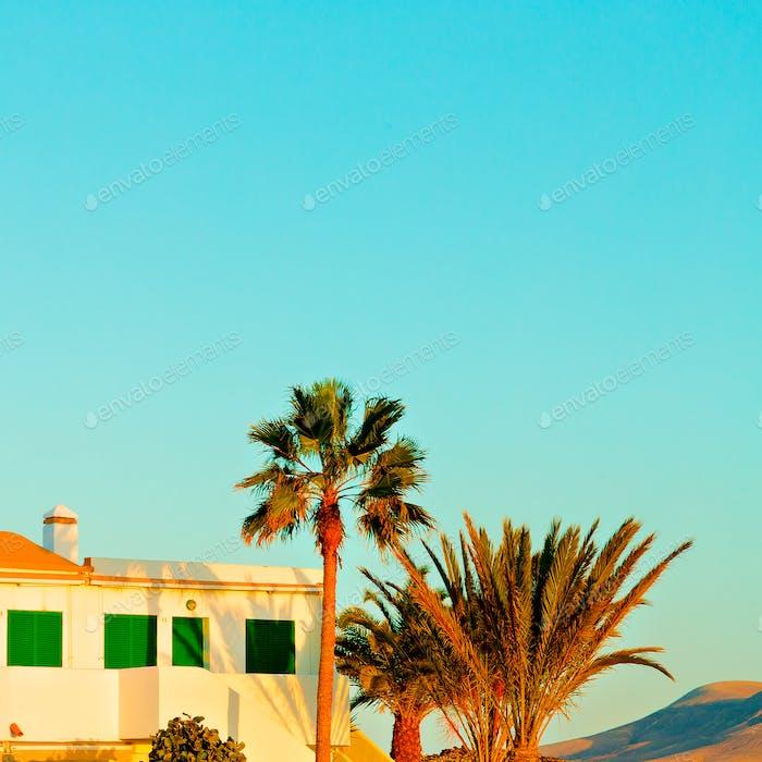 Canary Islands. Minimal. Palms. Sunset mood