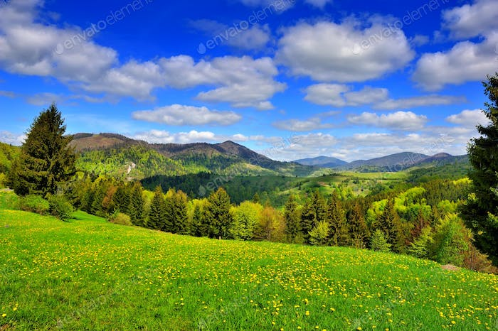 Mountain landscape with fresh green grass and dandelions near th