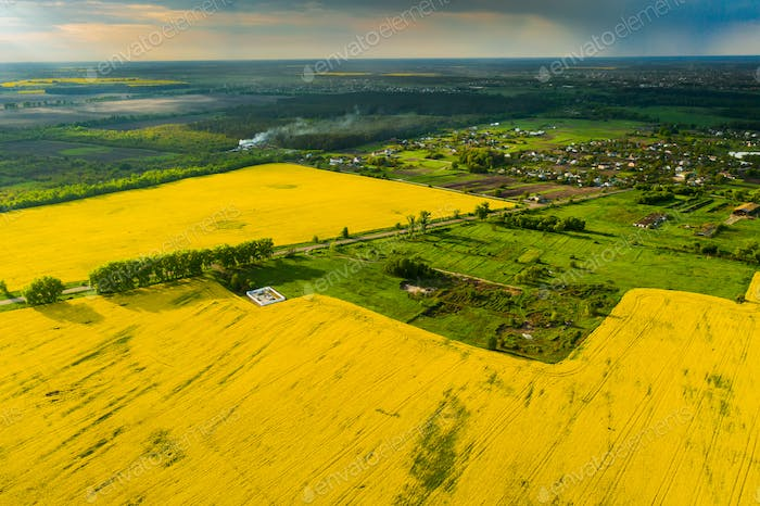 Drohne View of Yellow Rapssaed Fields