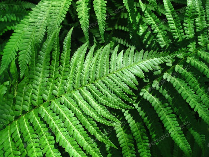 green fern leafs background